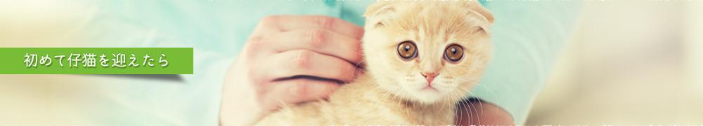 初めて子猫を迎えたら