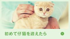 初めて仔猫を迎えたら